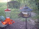 2009-08-13 squirrel feeder 3
